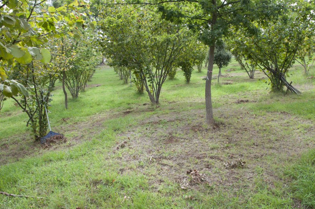 Brulés in the Truffle Orchard