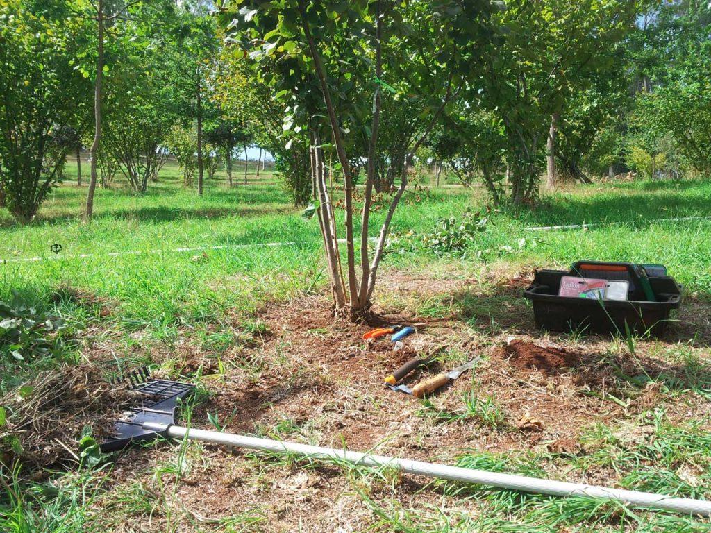 Hazel tree & Brule maintained