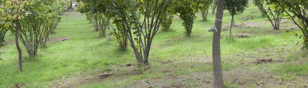 Yarra Valley Truffles: Blog