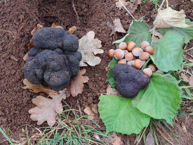 Iceberg truffle!